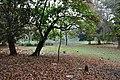 Acharya Jagadish Chandra Bose Indian Botanic Garden - Howrah 2011-02-20 1544.JPG