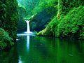 Acqua immersa nel verde.jpg