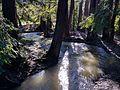 Adobe Creek in Los Altos Redwood Grove.jpg