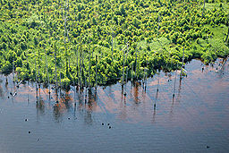 Aerial of too much water at Alligator River (5687226889).jpg