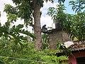 Affen Familie - panoramio.jpg