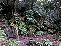 Agua Camote - panoramio.jpg