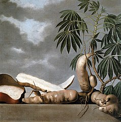 Still-life of the tropical fruit manioc