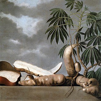 Cassava - 17th c. painting by Albert Eckhout in Dutch Brazil