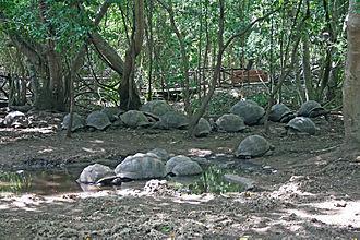 Changuu - Image: Aldabra giant tortoises on Changuu