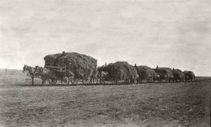 Alfalfa hay, 1915