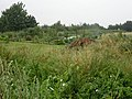 Allotment Gardens - geograph.org.uk - 30380.jpg
