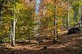 Almsee herbstlicher Buchenwald-4190.jpg