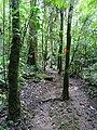 Along the Red Trail - Finca Esperanza Verde - Near Matagalpa - Nicaragua - 03 (31650561766).jpg