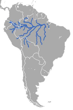 Amazonian manatee - Image: Amazonian Manatee