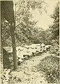 American bee journal (1913) (18118209841).jpg