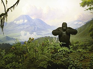 Carl Akeley - Gorilla diorama is one of Akeley's dioramas, which is on display in the American Museum of Natural History.