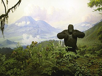 Diorama - The Exhibition Lab's Gorilla diorama at the American Museum of Natural History in New York City.