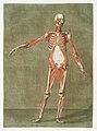 Anatomical illustration by Arnauld-Eloi Gautier-Dagoty , digitally enhanced by rawpixel-com 5.jpg
