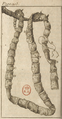 Andry - De la génération des vers (1741), planche p. 205.png