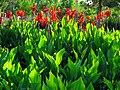 Angiosperms in iran گلها و گیاهان گلدار ایرانی 44.jpg