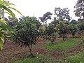 Anish nellickal 31 .jpg