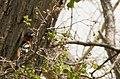 Another Bird (3631212157).jpg