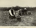 Anton Mauve - Potato Gatherers.jpg