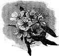 Apple Blossoms-Suggestive Programs-0120.jpg