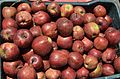 Apples at Sukhi Top near Gangotri WTK20150915-DSC 4009.jpg