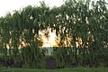 Apus de soare in Zapode la Mihalt - panoramio.jpg
