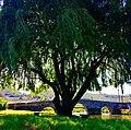 Arcos-viladconde19.jpg