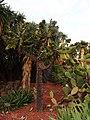 Arid Plants Garden - 2013.04 - panoramio.jpg