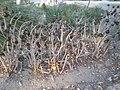 Arizona Cactus Garden 027.JPG
