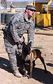 Army Training, For the Dogs DVIDS151314.jpg