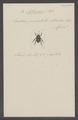 Arthrodes - Print - Iconographia Zoologica - Special Collections University of Amsterdam - UBAINV0274 027 02 0002.tif