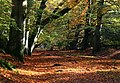 Ashridge Park in Autumn - geograph.org.uk - 1625962.jpg