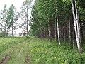 Asinovsky District, Tomsk Oblast, Russia - panoramio (232).jpg