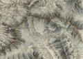 Atlas Suisse Jungfrau Finsteraarhorn.tiff