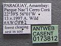 Atta laevigata casent0173812 label 1.jpg