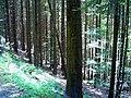 August Mount Kandel Masif Hochschwarzwald - Master Black Forest Photography 2014 - panoramio (4).jpg