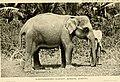 Aus de Wanderjahren eines Naturforschers. Reisen und Forschungen in Afrika, Asien und Amerika Meist ornithologischen Studien (1901) (19726798444).jpg