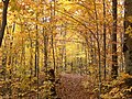 Autumn colours on the trail to Lac Gabet in La Mauricie National Park.JPG
