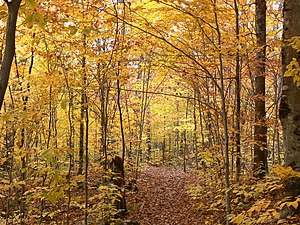 La Mauricie National Park - Flora fall in the path of Lake Gabet