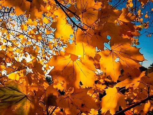 Autunno dorato - Golden autumn.jpg