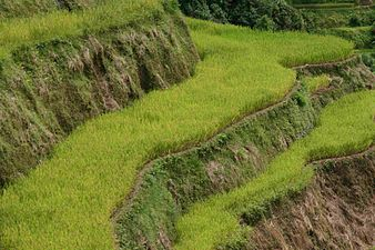 Cool Banaue Rice Terraces Wikipedia Largest Home Design Picture Inspirations Pitcheantrous