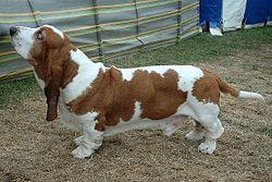 definition of hound