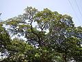 BatangasCathedraljf9936 08.JPG