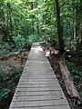 Battle Creek Cypress Swamp 39.jpg