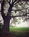 Baum des Lebens.jpg