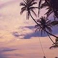 Beach coconut trees.jpg