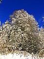 Beech - panoramio (5).jpg
