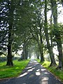 Beech avenue - geograph.org.uk - 983572.jpg