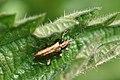 Beetle id (3494455875).jpg