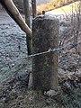 Belgisch-Luxemburgischer Grenzstein Nr. 59a (alt) (3).jpg